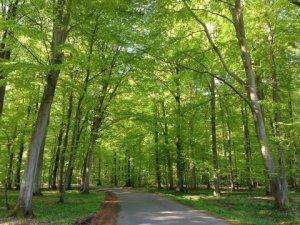 Vornæs Skov